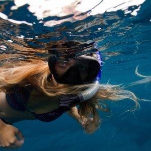 Ningaloo Reef Whale Shark Snorkeling