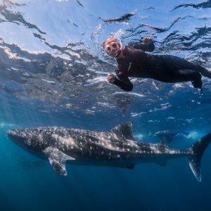 whale sharks ningaloo