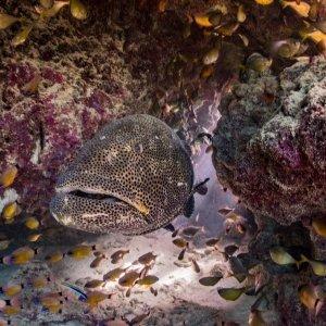 underwater-environment