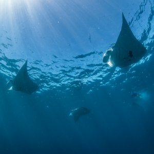 whales sharks