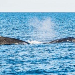 sunset-whale-shark-crusie-exmouth