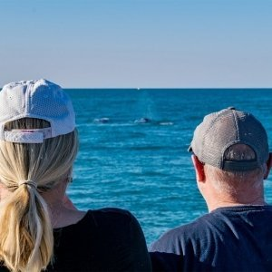sunset-whale-watching-ningaloo