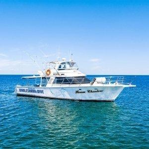 whale shark tours crusie